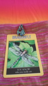 Dragonfly. Illusion.
