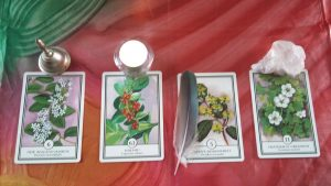 Recalibration Reading with First Light Flower Essences of New Zealand cards